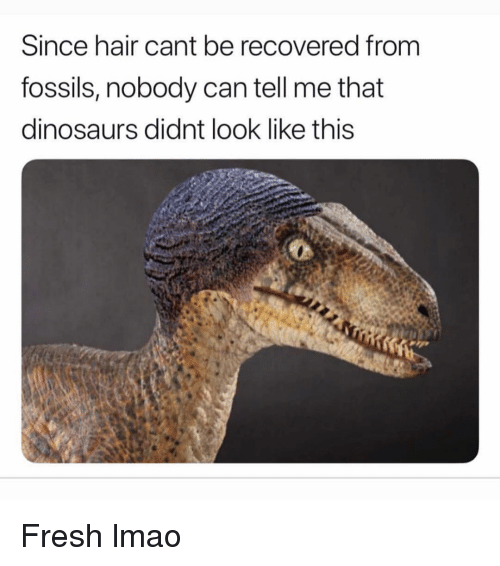 Fresh, Funny, and Lmao: Since hair cant be recovered from  fossils, nobody can tell me that  dinosaurs didnt look like this Fresh lmao