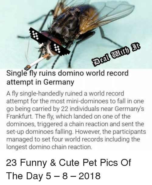Cute, Fall, and Funny: Single fly ruins domino world record  attempt in Germany  A fly single-handedly ruined a world record  attempt for the most mini-dominoes to fall in one  go being carried by 22 individuals near Germany's  Frankfurt. The fly, which landed on one of the  dominoes, triggered a chain reaction and sent the  set-up dominoes falling. However, the participants  managed to set four world records including the  longest domino chain reaction. 23 Funny & Cute Pet Pics Of The Day 5 – 8 – 2018