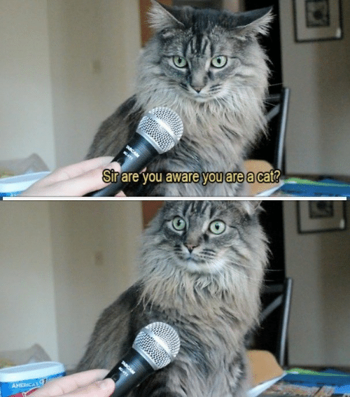 Cat, You, and Sir: Sir are you aware you are a cat