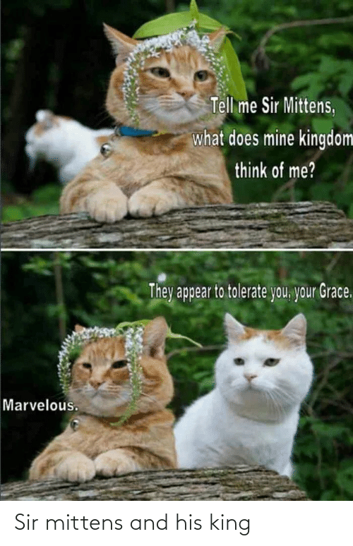 sir: Sir mittens and his king