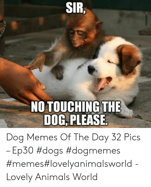 Animals, Dogs, and Memes: SIR  NO TOUCHING THE  DOG PLEASE Dog Memes Of The Day 32 Pics – Ep30 #dogs #dogmemes #memes#lovelyanimalsworld - Lovely Animals World