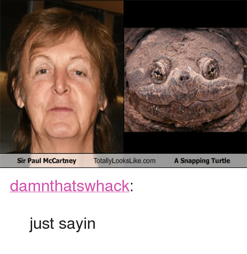 """Target, Tumblr, and Blog: Sir Paul McCartney  TotallyLooksLike.com  A Snapping Turtle <p><a href=""""http://damnthatswhack.tumblr.com/post/111135332609/just-sayin"""" class=""""tumblr_blog"""" target=""""_blank"""">damnthatswhack</a>:</p>  <blockquote><p>just sayin</p></blockquote>"""