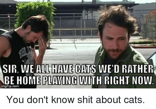 Cats, Memes, and Shit: SIR, WE ALL  HAVE CATS  WE'D RATHER  BE HOME PLAVINGWITH RIGHT NOW  HOME PLAVING UITH RIGHT NOW.  imgflip.com You don't know shit about cats.