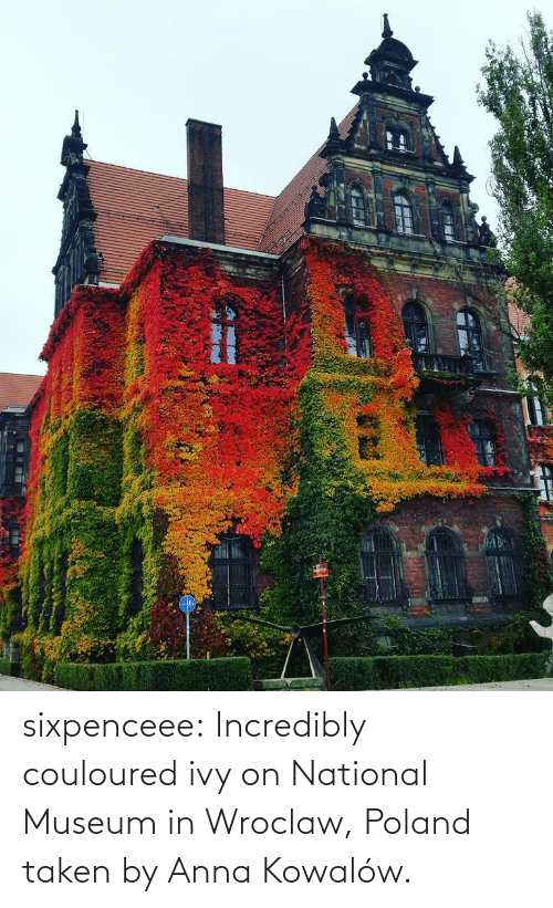 Incredibly: sixpenceee: Incredibly couloured ivy on  National Museum in Wroclaw, Poland taken by  Anna Kowalów.