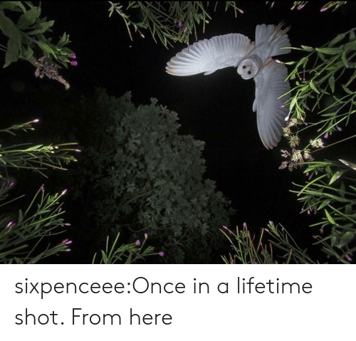 Once In A Lifetime: sixpenceee:Once in a lifetime shot. From here