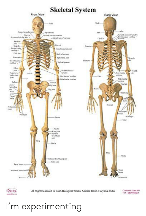 twen: Skeletal System  Front View  Back View  S  Ada  tyind bo  Sevh covical vew  Sovndh conl vnd  ackridbr  Cade  Mrri of m  Cie  Solde  in r  apd  dod  Sd  M  gd  -Sevah  Inh  S  w  Ehon  Twdts oe  n  Fi mber er  twen  ল  v  a  rub  ade  Saa  SaraR  Rale  C  bs  Son  Ma  he  Mesoe  bano  Phg  F  Fa  -K  Tea-  Tha-  Fle  rbifh jo  Mo bong  Tanal  hencs  Dblos  Al Right Reserved to Desh Biological Works, Ambala Cant, Haryana, India  Cunlamr Can No  9t-98960020  LCTTTT) I'm experimenting