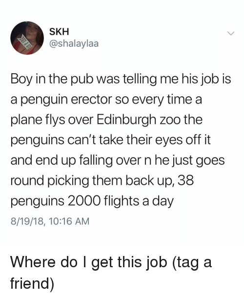Memes, Penguin, and Penguins: SKH  @shalaylaa  Boy in the pub was telling me his job IS  a penguin erector so every time a  plane flys over Edinburgh zoo the  penguins can't take their eyes off it  and end up falling over n he just goes  round picking them back up, 38  penguins 2000 flights a day  8/19/18, 10:16 AM Where do I get this job (tag a friend)
