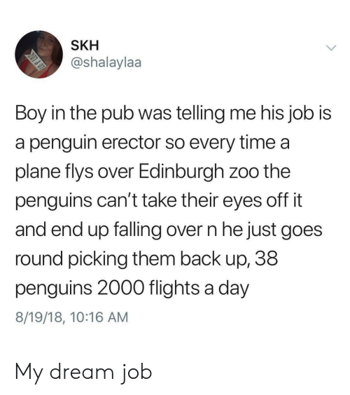 Pub: SKH  @shalaylaa  Boy in the pub was telling me his job is  a penguin erector so every time a  plane flys over Edinburgh zoo the  penguins can't take their eyes off it  and end up falling over n he just goes  round picking them back up, 38  penguins 2000 flights a day  8/19/18, 10:16 AM My dream job