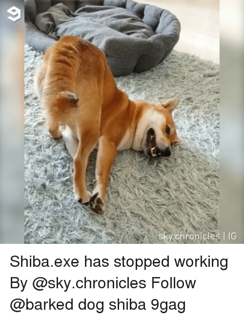 9gag, Memes, and 🤖: sky,chronicles IG Shiba.exe has stopped working By @sky.chronicles Follow @barked dog shiba 9gag