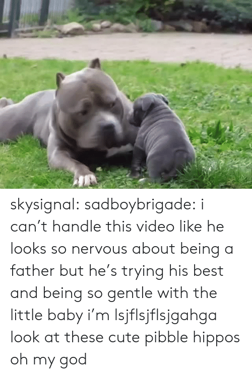 Cute, God, and Oh My God: skysignal: sadboybrigade:  i can't handle this video like he looks so nervous about being a father but he's trying his best and being so gentle with the little baby i'm lsjflsjflsjgahga  look at these cute pibble hippos oh my god