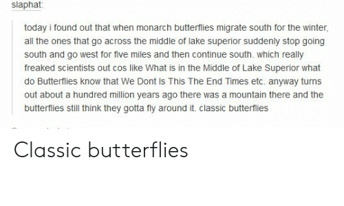 go west: slaphat:  today i found out that when monarch butterflies migrate south for the winter,  all the ones that go across the middle of lake superior suddenly stop going  south and go west for five miles and then continue south. which really  freaked scientists out cos like What is in the Middle of Lake Superior what  do Butterflies know that We Dont Is This The End Times etc. anyway turns  out about a hundred million years ago there was a mountain there and the  butterflies still think they gotta fly around it. classic butterflies Classic butterflies