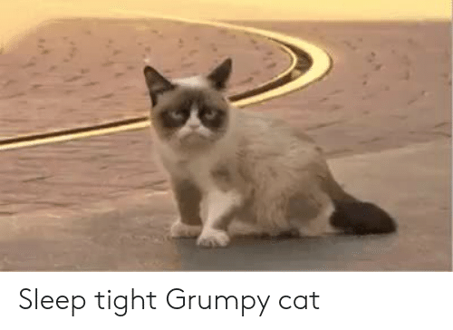Grumpy Cat: Sleep tight Grumpy cat