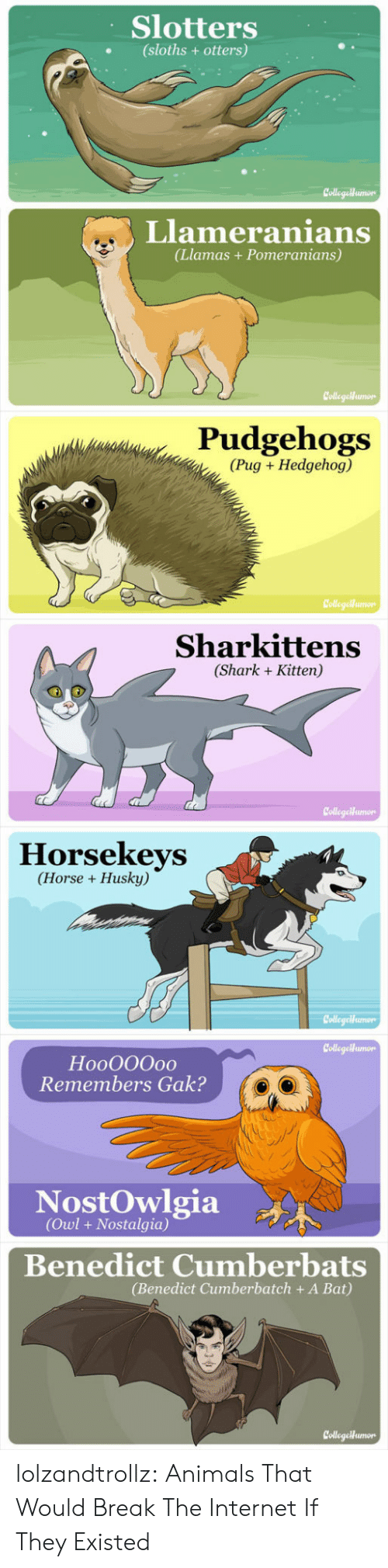 Animals, Internet, and Nostalgia: Slotters  (sloths + otters)  CollegaHumon  Llameranians  (Llamas+Pomeranians)  CollegeMumon  Pudgehogs  (Pug Hedgehog)  Collegeiumo  Sharkittens  (Shark Kitten)  CollegeHumor  Horsekeys  (Horse Husky)  Collegeumon  CollegeHumon  HooO00o0  Remembers Gak?  NostOwlgia  (Owl+ Nostalgia)  Benedict Cumberbats  (Benedict Cumberbatch + A Bat)  CollegetHumon lolzandtrollz:  Animals That Would Break The Internet If They Existed