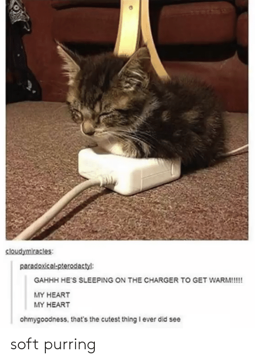 Heart, Sleeping, and Charger: sloudymiracles  paradoxical-pterodactyl  GAHHH HE'S SLEEPING ON THE CHARGER TO GET WARM!!!!  MY HEART  MY HEART  ohmygoodness, that's the cutest thing I ever did see soft purring