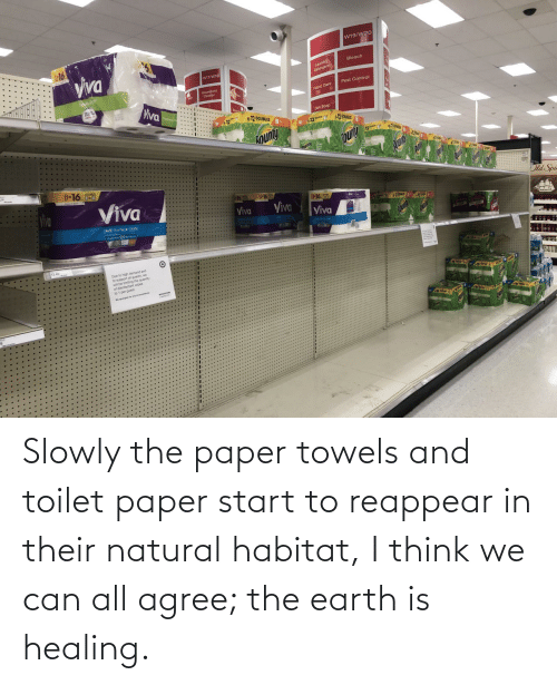 toilet paper: Slowly the paper towels and toilet paper start to reappear in their natural habitat, I think we can all agree; the earth is healing.