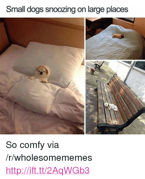 "Dogs, Http, and Via: Small dogs snoozing on large places <p>So comfy via /r/wholesomememes <a href=""http://ift.tt/2AqWGb3"">http://ift.tt/2AqWGb3</a></p>"