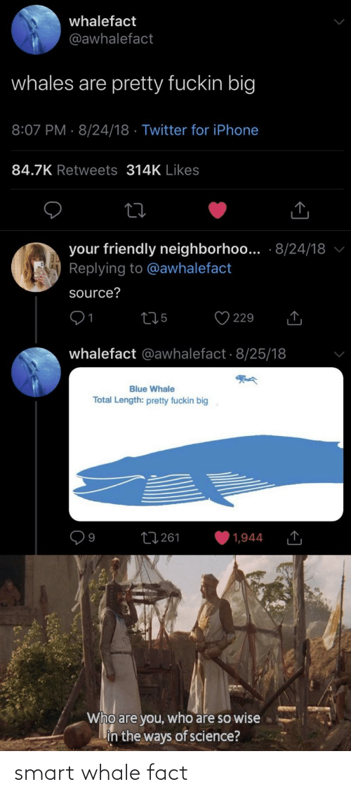 whale: smart whale fact