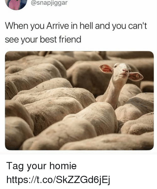 Best Friend, Funny, and Homie: @snapjiggar  When you Arrive in hell and you can't  see your best friend Tag your homie https://t.co/SkZZGd6jEj