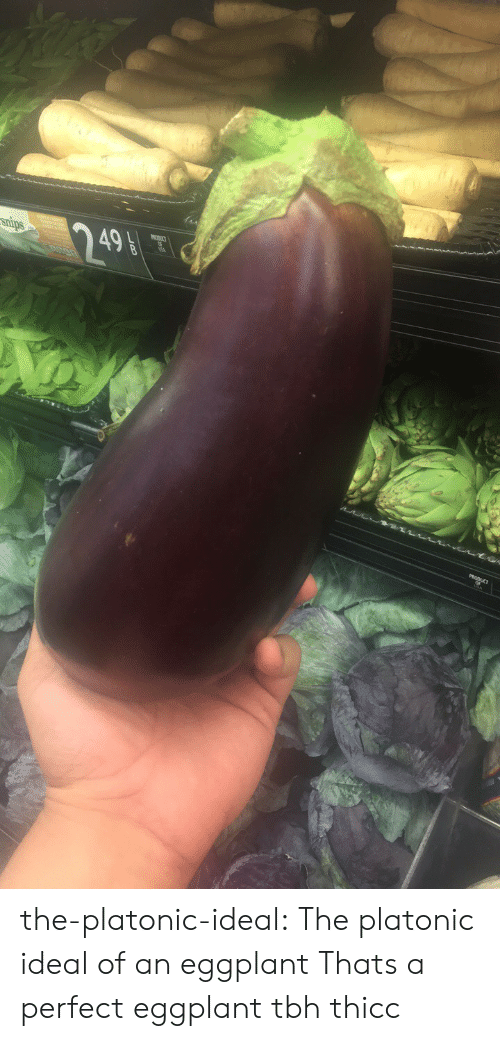 Tbh, Tumblr, and Blog: snips  249 the-platonic-ideal:  The platonic ideal of an eggplant  Thats a perfect eggplant tbh thicc