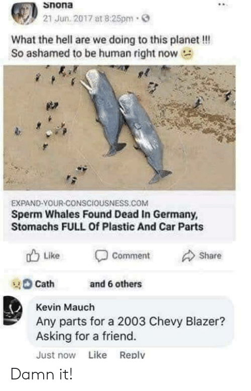 Chevy, Germany, and Hell: Snona  21 Jun. 2017 at 8:25pm.  What the hell are we doing to this planet !!!  So ashamed to be human right now  EXPAND-YOUR-CONSCIOUSNESS.COM  Sperm Whales Found Dead In Germany,  Stomachs FULL Of Plastic And Car Parts  山Like Comment Share  tand 6 others  Cath  Kevin Mauch  Any parts for a 2003 Chevy Blazer?  Asking for a friend.  Just now Like Reply Damn it!