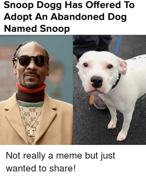 snoop dogg: Snoop Dogg Has Offered To  Adopt An Abandoned Dog  Named Snoop Not really a meme but just wanted to share!