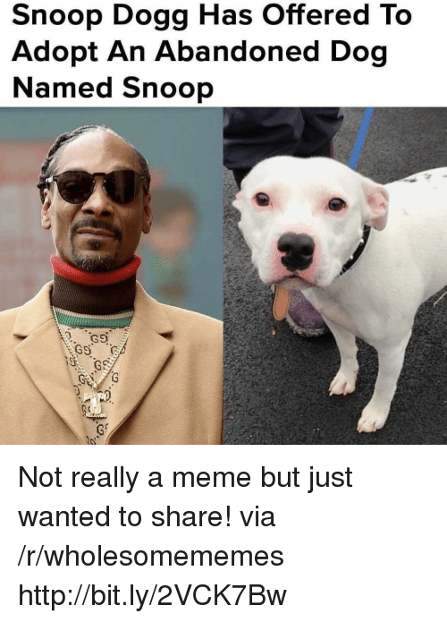 snoop dogg: Snoop Dogg Has Offered To  Adopt An Abandoned Dog  Named Snoop Not really a meme but just wanted to share! via /r/wholesomememes http://bit.ly/2VCK7Bw