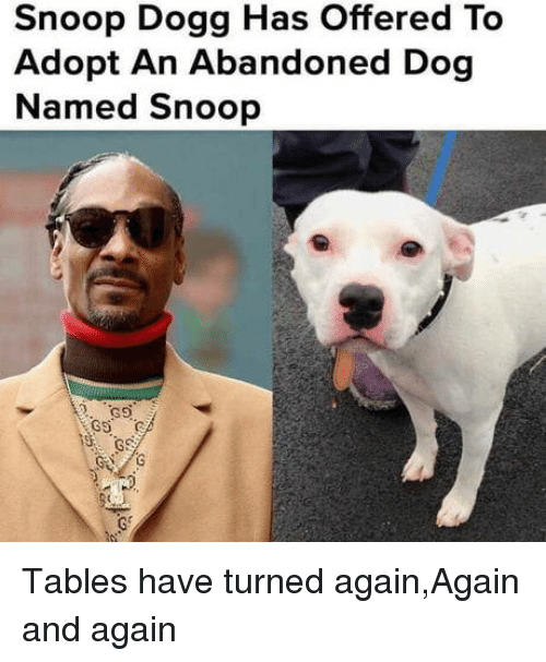 Tables Have Turned: Snoop Dogg Has Offered To  Adopt An Abandoned Dog  Named Snoop Tables have turned again,Again and again