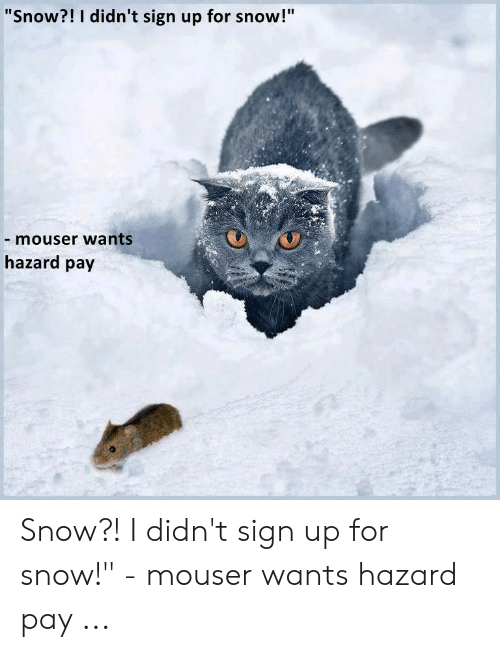 """Funny Snow Memes: """"Snow?! I didn't sign up for snow!""""  - mouser wants  hazard pay Snow?! I didn't sign up for snow!"""" - mouser wants hazard pay ..."""