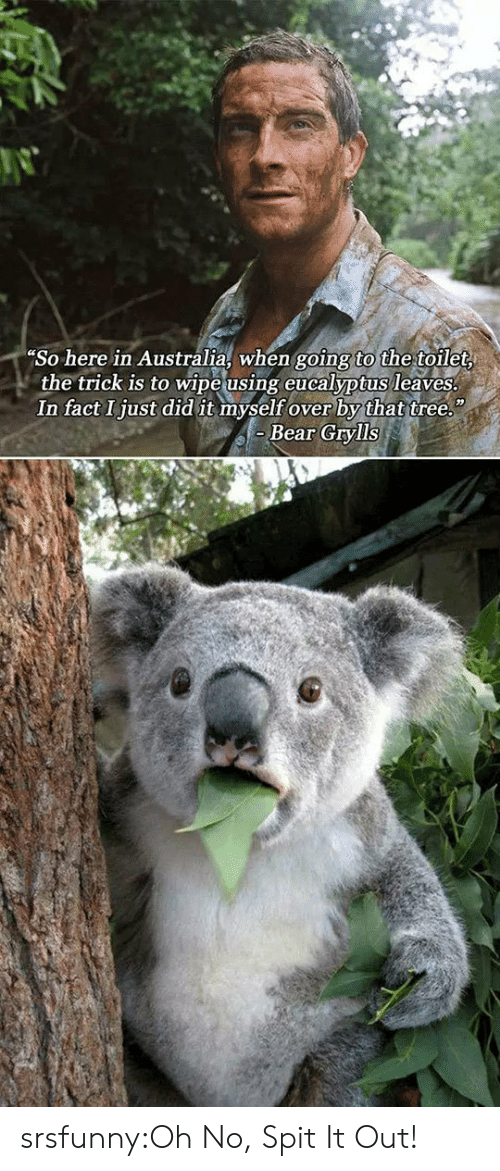 Bear Grylls: So here in Australia, when going to the toilet  the trick is to wipe using eucalyptus leaves  In fact Ijust did it myself over by that tree.  Bear Grylls srsfunny:Oh No, Spit It Out!