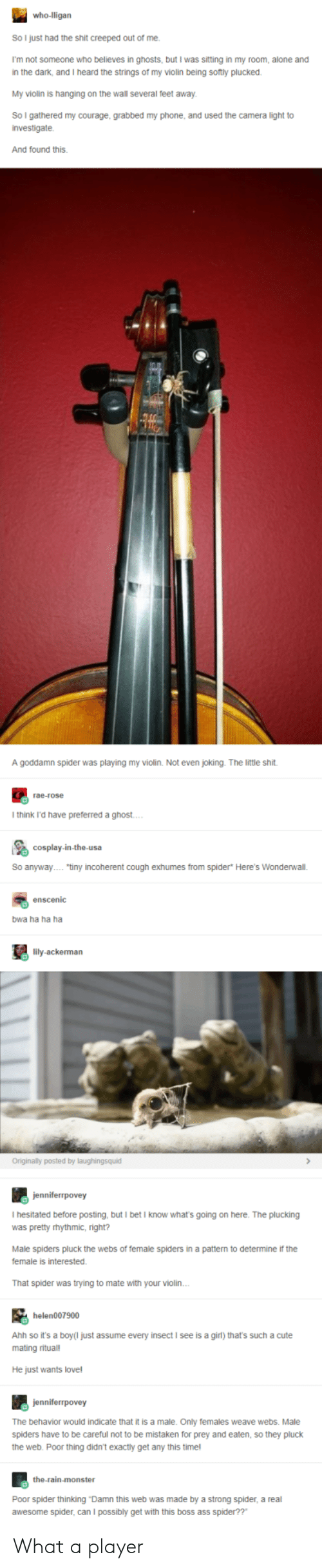 """incoherent: So I just had the shit creeped out of me.  I'm not someone who believes in ghosts, but I was sitting in my room, alone and  in the dark, and I heard the strings of my violin being sotly plucked  My violin is hanging on the wall several feet away  So I gathered my courage, grabbed my phone, and used the camera light to  investigate.  And found this.  A goddamn spider was playing my violin. Not even joking. The little shit  rae-rose  I think i'd have preferred a ghost  So anyway""""tiny incoherent cough exhumes from spider* Here's Wonderwall.  enscenic  bwa ha ha ha  lily-ackerman  Originally posted by laughingsquid  I hesitated before posting, but I betI know what's going on here. The plucking  was pretty rhythmic, right?  Male spiders pluck the webs of temale spiders in a pattern to determine if the  female is interested  That spider was trying to mate with your violin  helen007900  Ahh so it's a boy(I just assume every insect I see is a girl) that's such a cute  mating ritual!  He just wants love!  The behavior would indicate that it is a male. Only females weave webs. Male  spiders have to be careful not to be mistaken for prey and eaten, so they pluck  the web. Poor thing didn't exactly get any this timel  the-rain-monster  Poor spider thinking Damn this web was made by a strong spider, a real  awesome spider, can I possibly get with this boss ass spider??"""" What a player"""