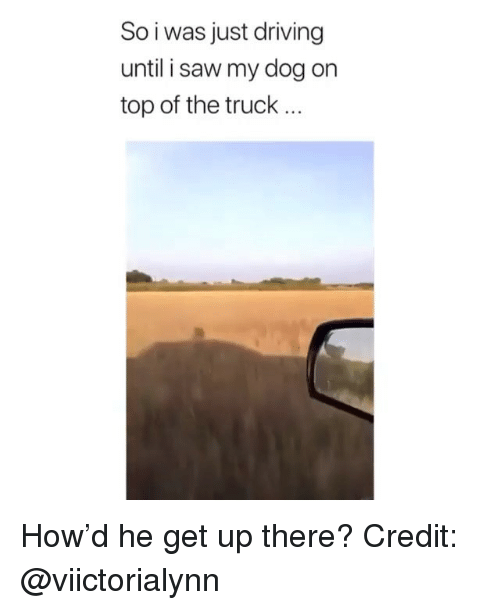 Driving, Memes, and Saw: So i was just driving  until i saw my dog on  top of the truck... How'd he get up there? Credit: @viictorialynn