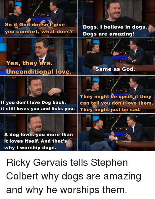 gervais: So if God doesn't give  you comfort, what does?  Dogs. I believe in dogs.  Dogs are amazing  Yes, they are.  Uinconditional love.  Same as God  They might be upset if they  can tell you don tlove them.  If you don't love Dog back,  it still loves you and licks you They might just be sad.  A dog loves you more than  it loves itself. And that's  why I worship dogs. Ricky Gervais tells Stephen Colbert why dogs are amazing and why he worships them.