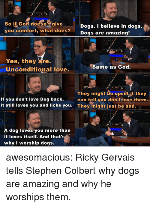 gervais: So if God doesn't give  you comfort, what does?  Dogs. I believe in dogs.  Dogs are amazing  Yes, they are.  Uinconditional love.  Same as God  They might be upset if they  can tell you don tlove them.  If you don't love Dog back,  it still loves you and licks you They might just be sad.  A dog loves you more than  it loves itself. And that's  why I worship dogs. awesomacious:  Ricky Gervais tells Stephen Colbert why dogs are amazing and why he worships them.