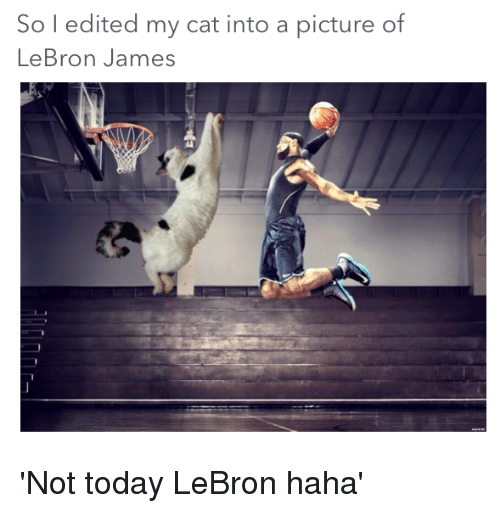 LeBron James, Reddit, and Lebron: So l edited my cat into a picture of  LeBron James