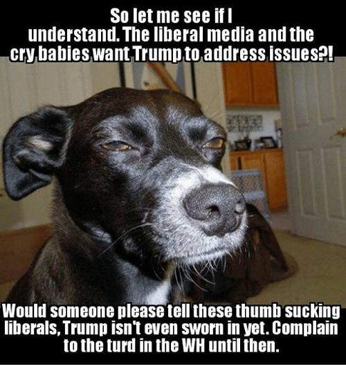 so let me see if i understand the liberal media 9507073 so let me see if i understand the liberal media and the cry babies