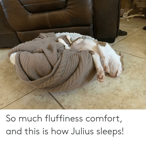 Fluffiness: So much fluffiness comfort, and this is how Julius sleeps!