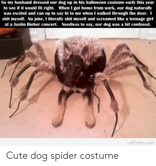I Shit Myself: So my husband dressed our dog up in his halloween costume early this year  to see if it would fit right. When I got home from work, our dog naturally  was excited and ran up to say hi to me when I walked through the door. I  shit myself. No joke, I literally shit myself and screamed like a teenage girl  at a Justin Bieber concert. Needless to say, our dog was a bit confused  LeFunny.net Cute dog spider costume