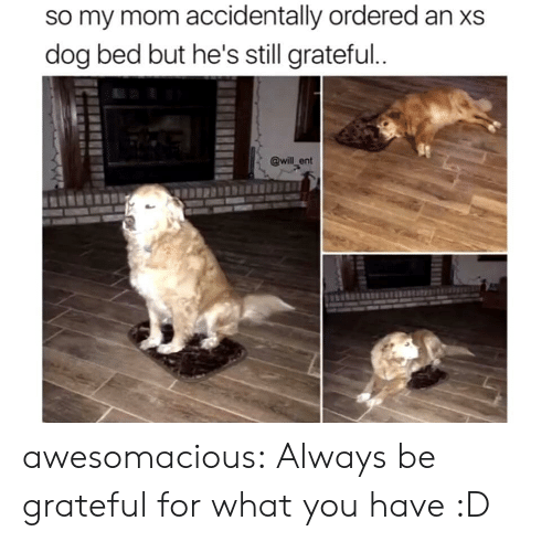 Tumblr, Blog, and Mom: so my mom accidentally ordered an xs  dog bed but he's still grateful..  @will ent awesomacious:  Always be grateful for what you have :D