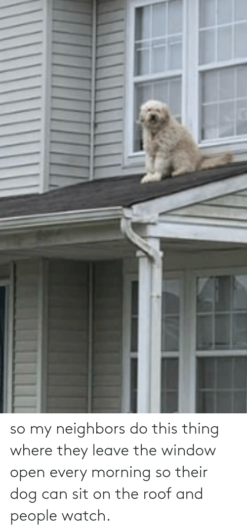 Leave: so my neighbors do this thing where they leave the window open every morning so their dog can sit on the roof and people watch.