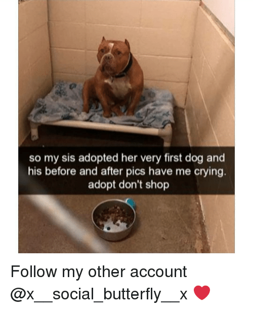 Crying, Memes, and Butterfly: so my sis adopted her very first dog and  his before and after pics have me crying.  adopt don't shop Follow my other account @x__social_butterfly__x ❤