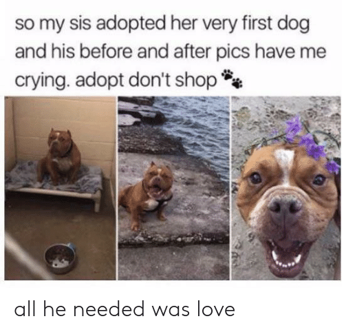 Crying, Love, and Her: so my sis adopted her very first dog  and his before and after pics have me  crying. adopt don't shop all he needed was love