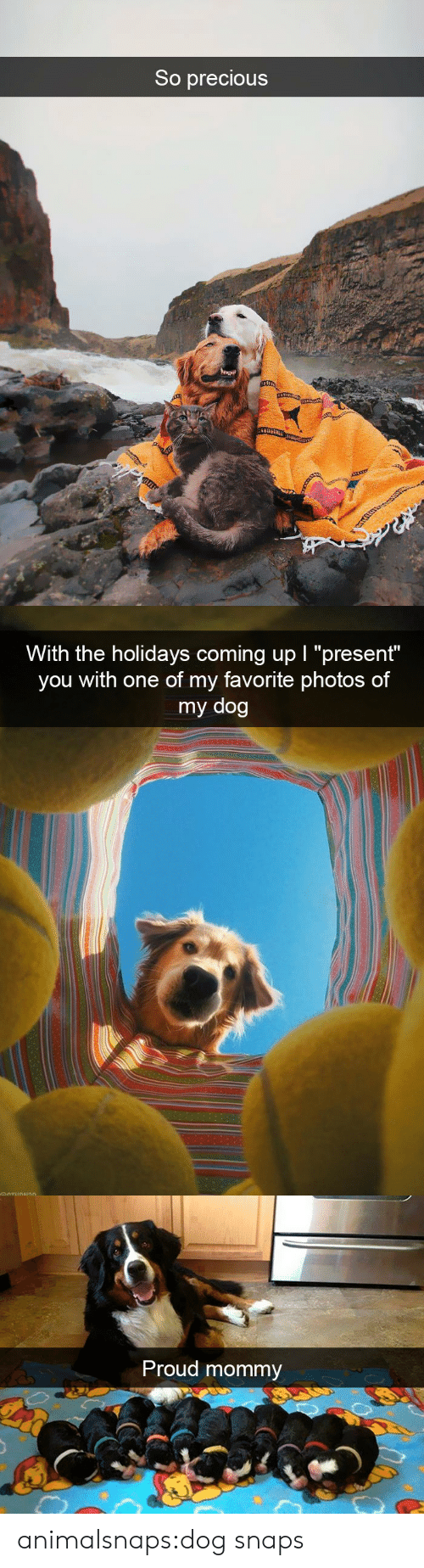 "the holidays: So precious   With the holidays coming up I ""present""  you with one of my favorite photos of  my dog   Proud mommy animalsnaps:dog snaps"