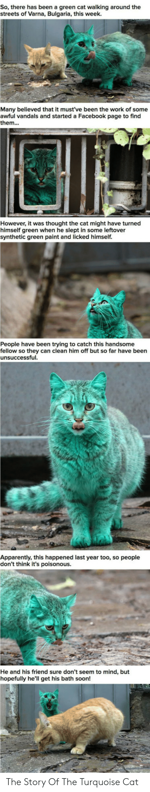 Apparently, Facebook, and Soon...: So, there has been a green cat walking around the  streets of Varna, Bulgaria, this week.  Many believed that it must've been the work of some  awful vandals and started a Facebook page to find  them...  However, it was thought the cat might have turned  himself green when he slept in some leftover  synthetic green paint and licked himself.  People have been trying to catch this handsome  fellow so they can clean him off but so far have been  unsuccessful  Apparently, this happened last year too, so people  don't think it's poisonous.  He and his friend sure don't seem to mind, but  hopefully he'll get his bath soon! The Story Of The Turquoise Cat