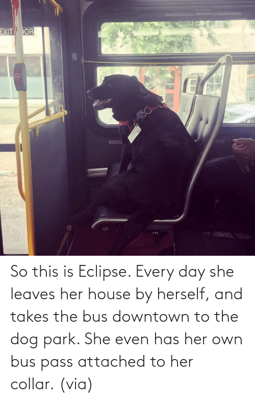 pass: So this is Eclipse. Every day she leaves her house by herself, and takes the bus downtown to the dog park. She even has her own bus pass attached to her collar. (via)