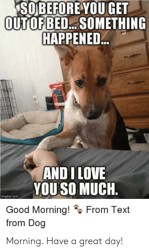 Love, Memes, and Good Morning: SOBEFOREYOU GET  OUTOFBED... SOMETHING  HAPPENED  AND I LOVE  YOU SO MUCH.  Good Morning!  from Dog  From Text Morning. Have a great day!