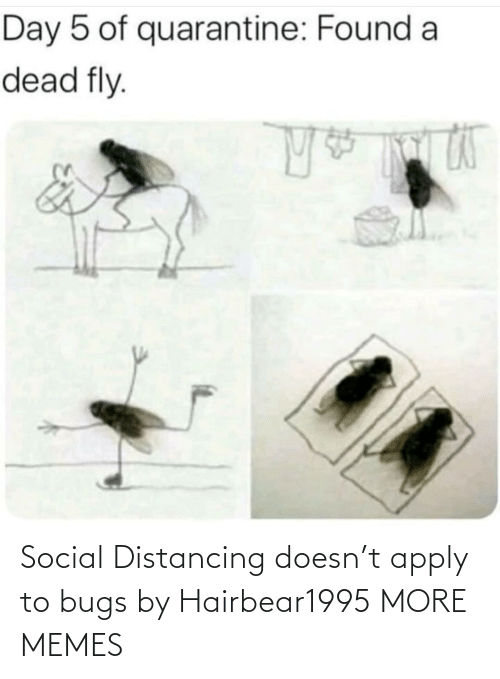 bugs: Social Distancing doesn't apply to bugs by Hairbear1995 MORE MEMES