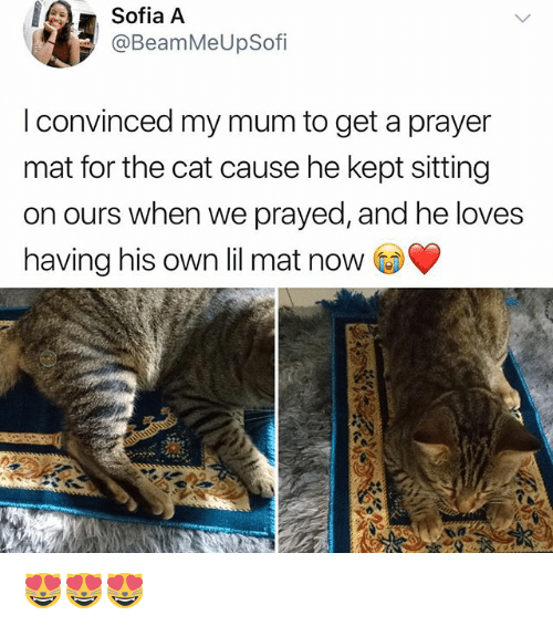 Memes, Prayer, and 🤖: Sofia A  @BeamMeUpSofi  OfI  I convinced my mum to get a prayer  mat for the cat cause he kept sitting  on ours when we prayed, and he loves  having his own lil mat now 😻😻😻