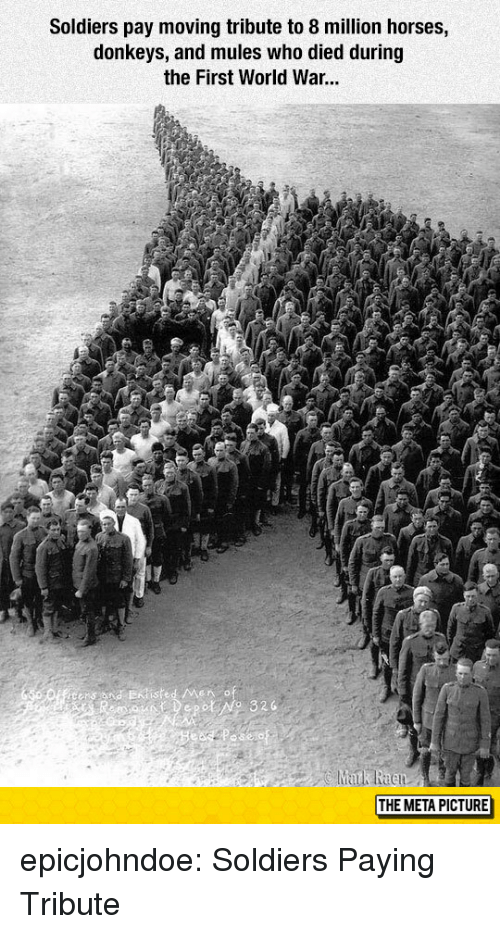 first world: Soldiers pay moving tribute to 8 million horses,  donkeys, and mules who died during  the First World War...  THE META PICTURE epicjohndoe:  Soldiers Paying Tribute