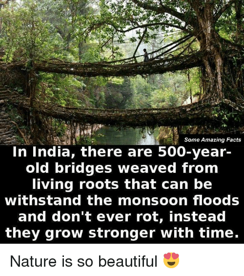 Withstanded: Some Amazing Facts  In India, there are 500-year-  old bridges weaved from  living roots that can be  withstand the monsoon floods  and don't ever rot, instead  they grow stronger with time. Nature is so beautiful 😍