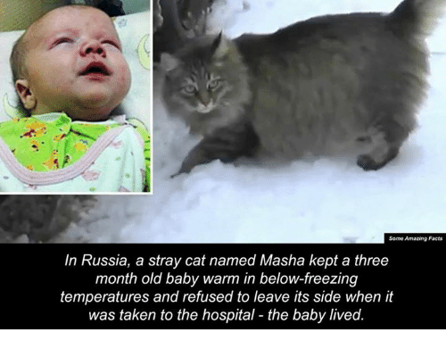 stray cats: Some Amazing Facts  In Russia, a stray cat named Masha kept a three  month old baby warm in below-freezing  temperatures and refused to leave its side when it  was taken to the hospital the baby lived.
